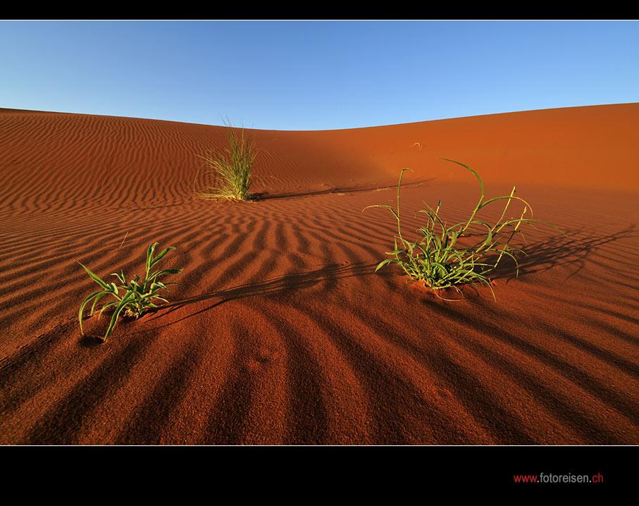 Fotoparadies Wüste Namib