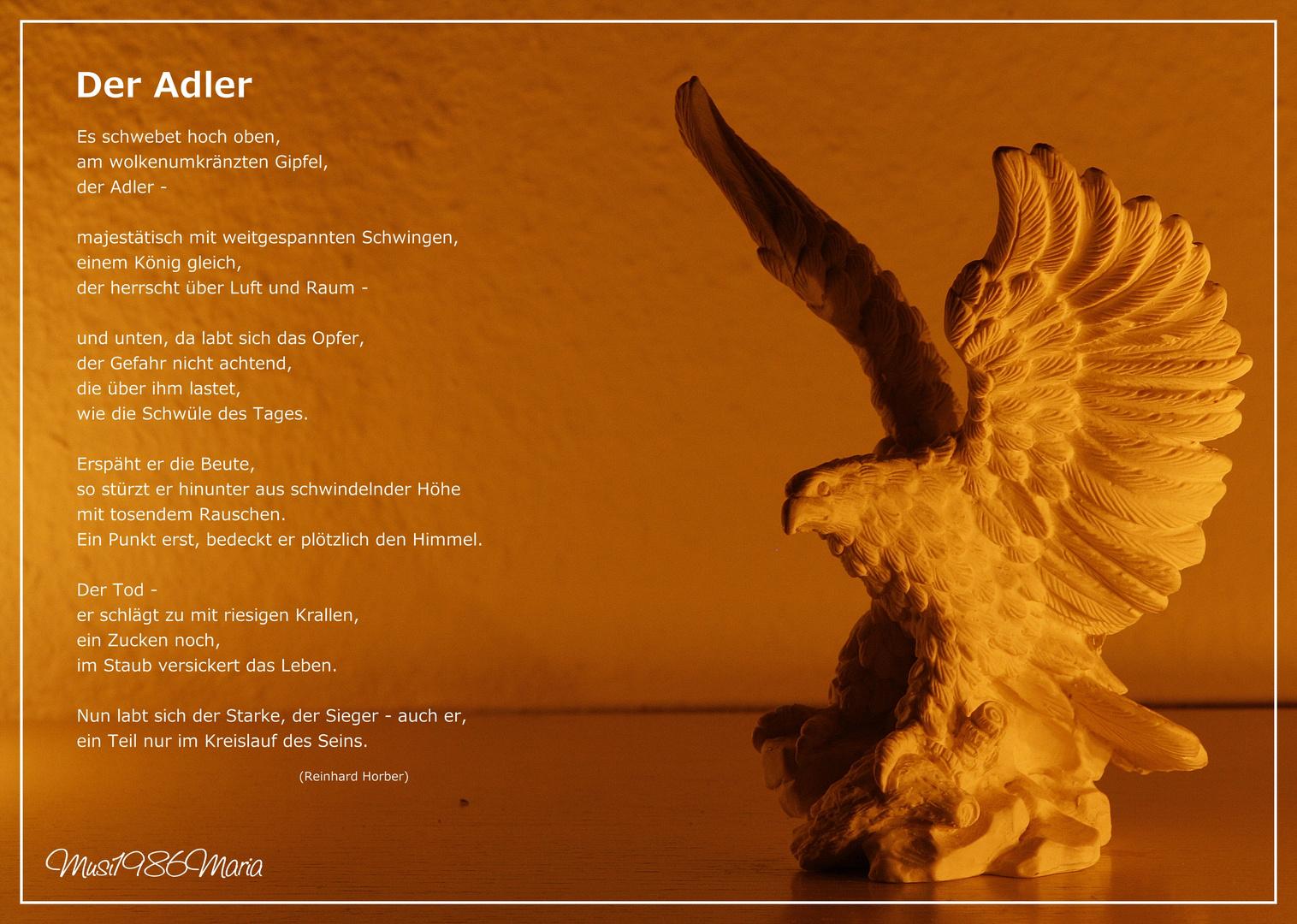 Fotoreihe - Adler III