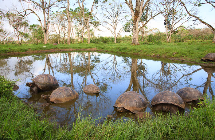 Fotoreise Galapagos Inseln -  Galapagos Riesenschildkröten