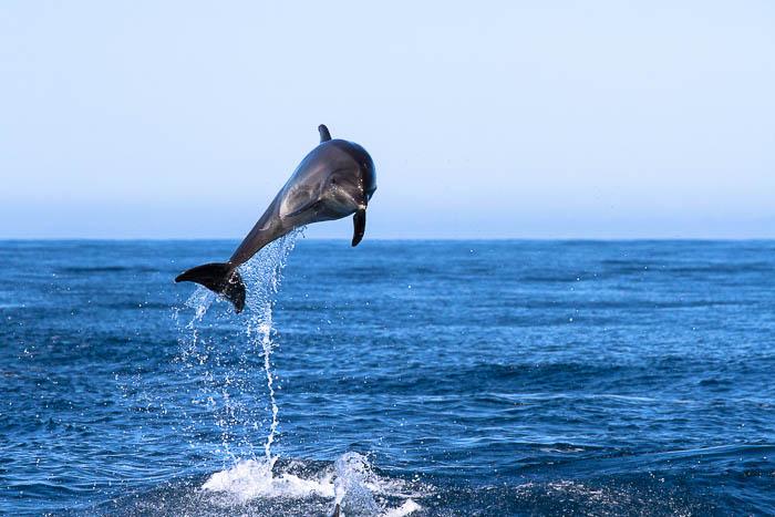 Fotoreise Galapagos Inseln -  Großer Tümmler - Delfin