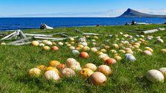 Fotoreise Island Westfjorde (Östliche Küste) im Mai 2018 / Impression 06