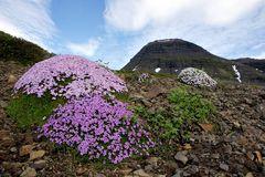 Fotoreise Island Westfjorde (Östliche Küste) im Mai 2018 / Impression 17