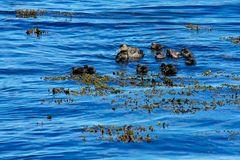 Fotoreise Island Westfjorde (Östliche Küste) im Mai 2018 / Impression 30