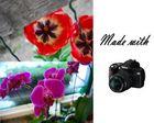 Fotos von Blumengeschäft