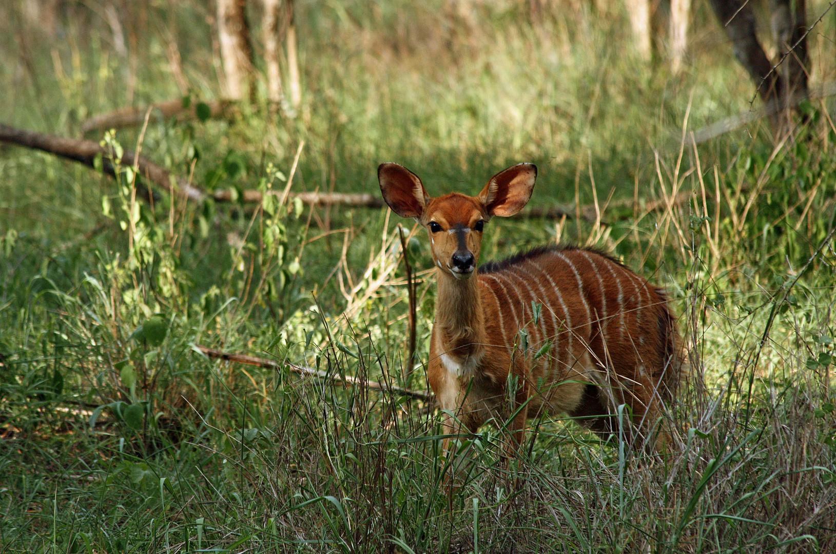 Fotosafari in Südafrika VIII