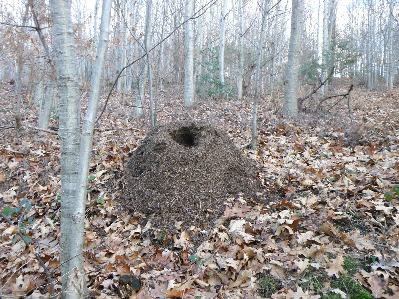 fourmilière abandonnée