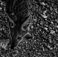 fox.com(e)