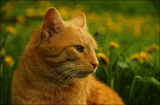 Foxi, der Träumer ...