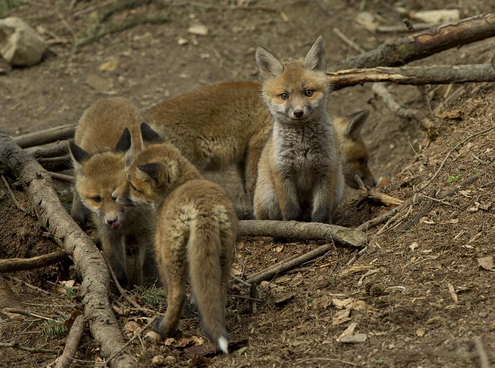 Foxis Familie
