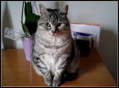 Fox,,un gatto dallo sguardo indagatore!!!