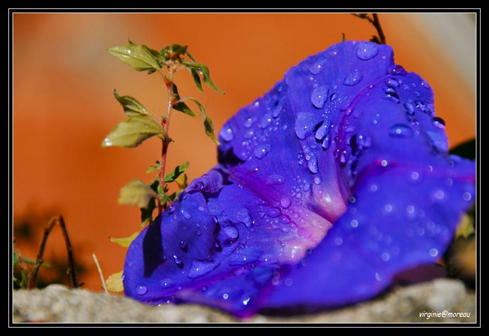 Fraîche Fleur...