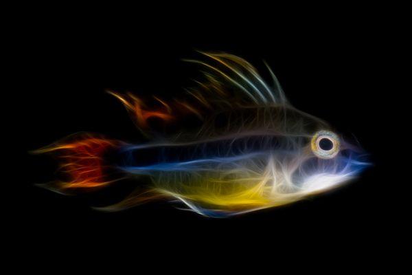 Fractalius Fish
