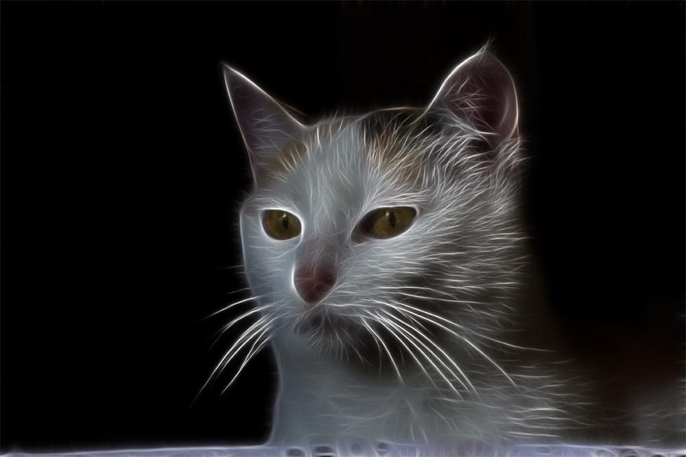 Fractalius Katze