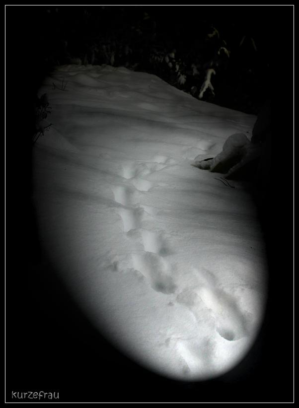 Fräulein Lieselottes Spuren im Schnee