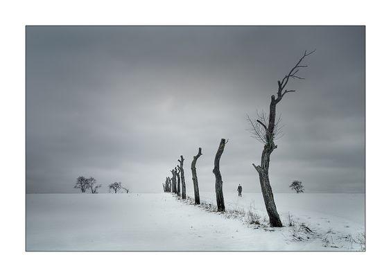 « Fräulein Mela`s Gespür für Schnee »