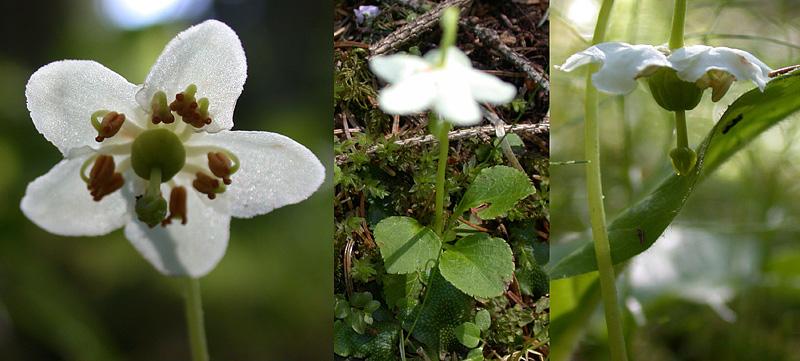 Frage an die Botaniker