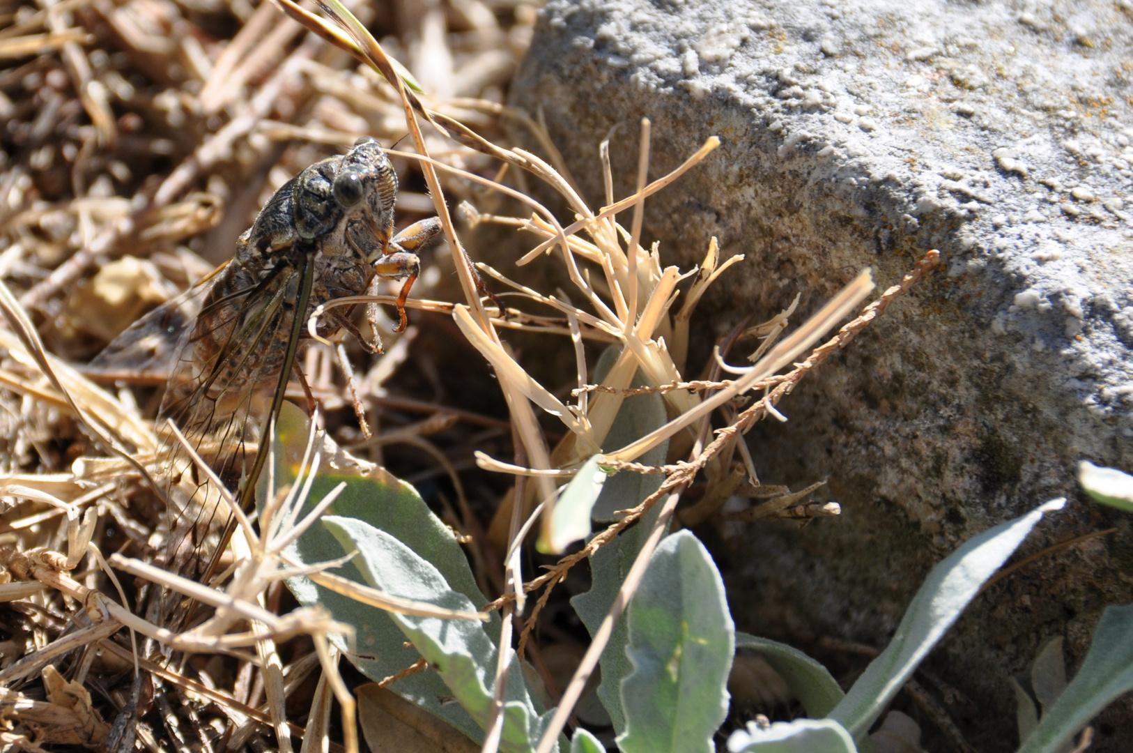 Fragliches Insekt