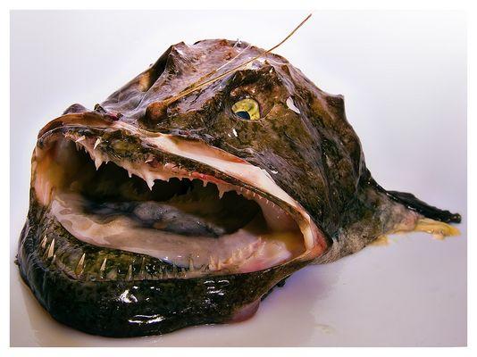 fragt nicht nach Fischstäbchen