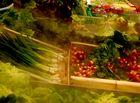 fraicheur des legumes verts