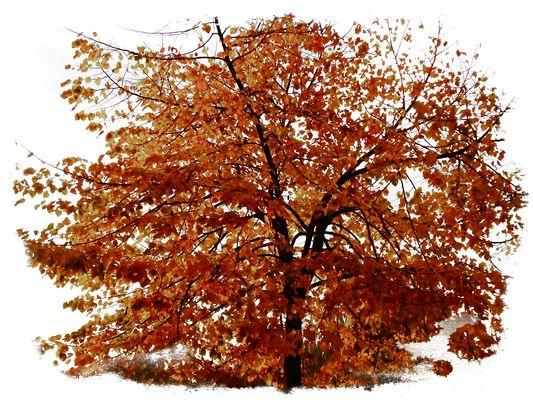 Frammenti d'autunno