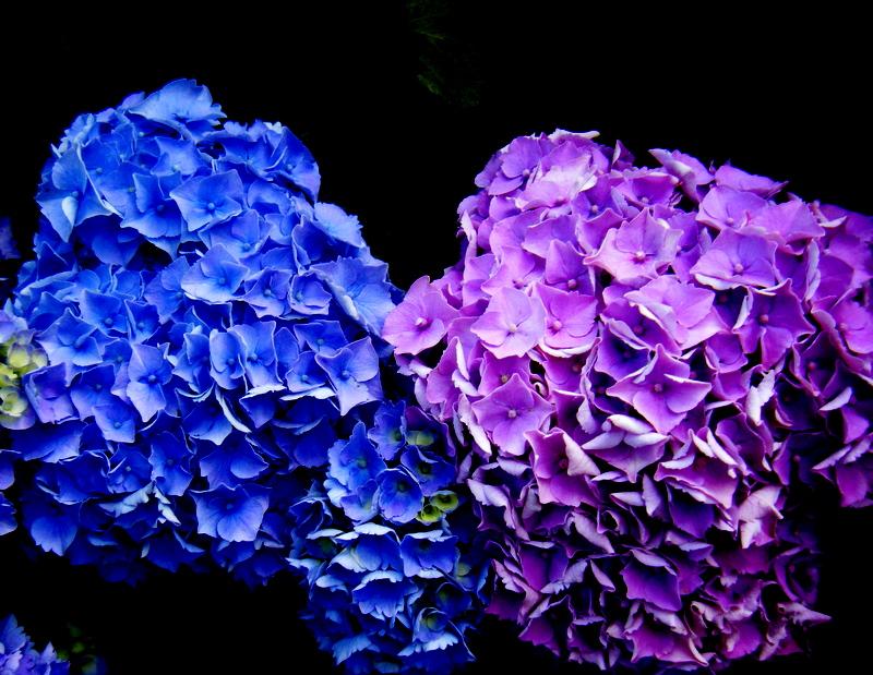 France' flowers