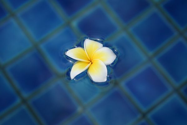 Frangipani oder auf Thai Lilawadee