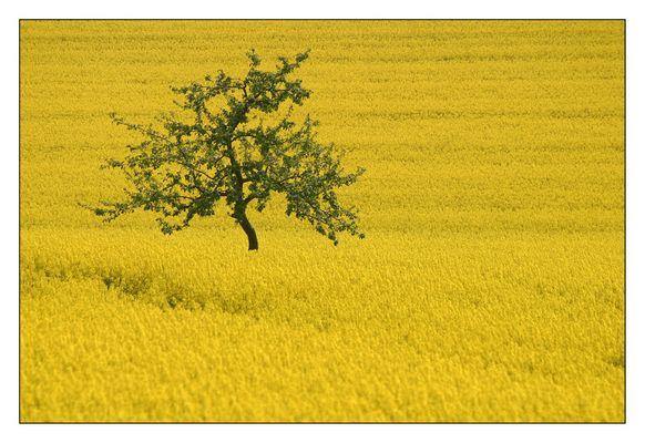 Frankens gelbes Meer