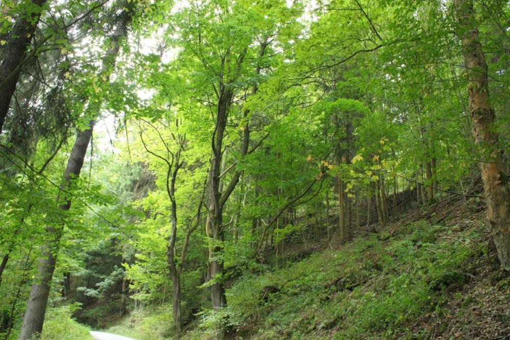 Frankenwald - Teil 1