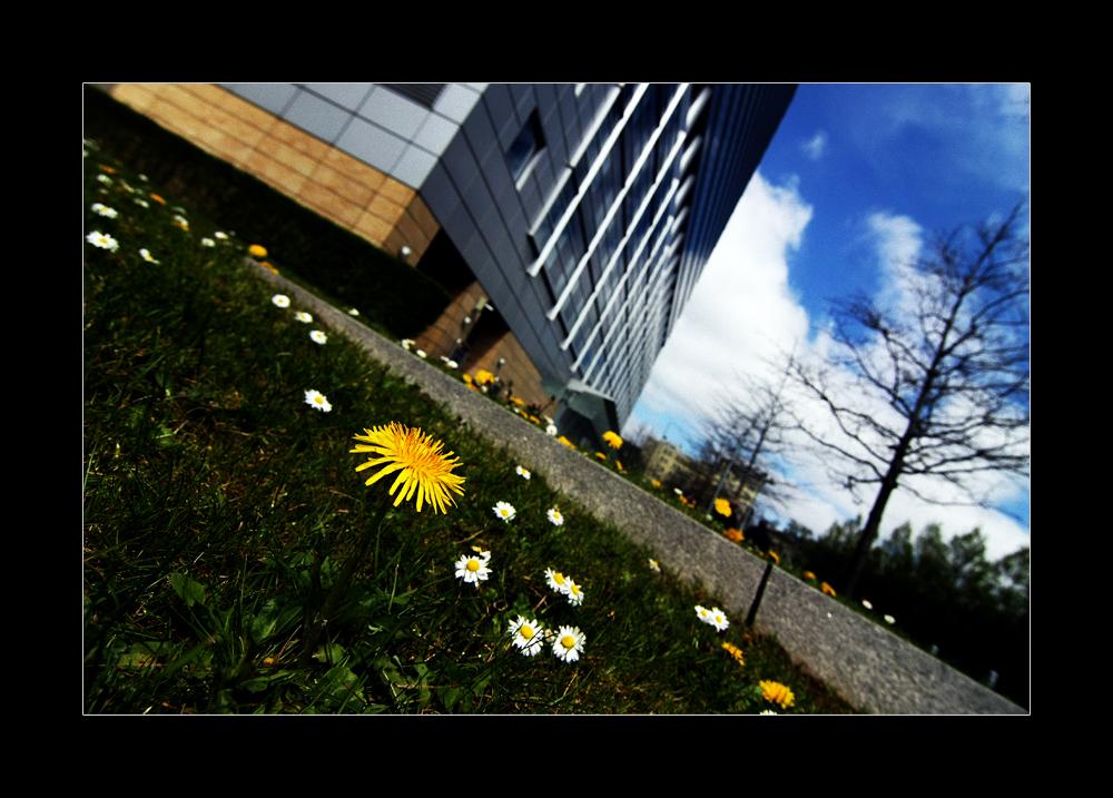 Frankfurter Frühling