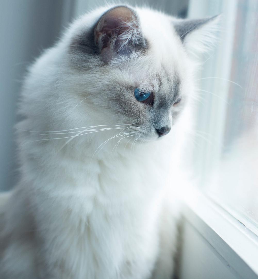 Franz am Fenster