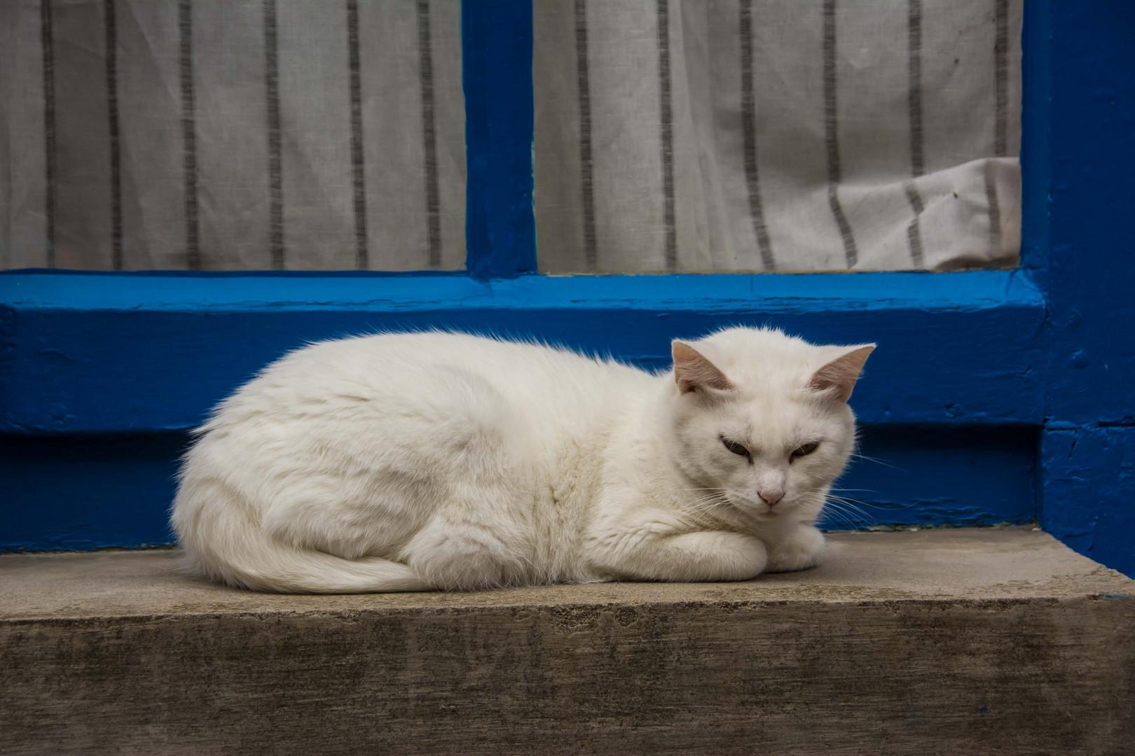 Französische Katze