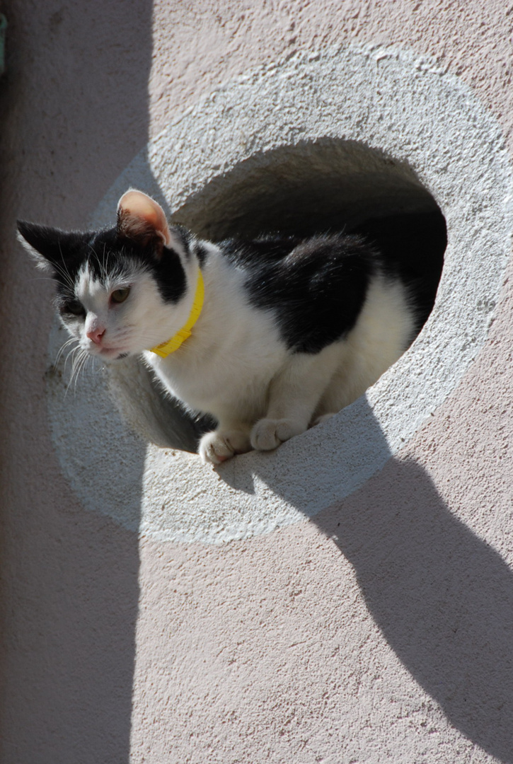 Französische Katze 2