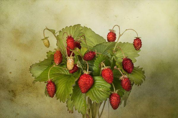 Französische Monatserdbeeren....