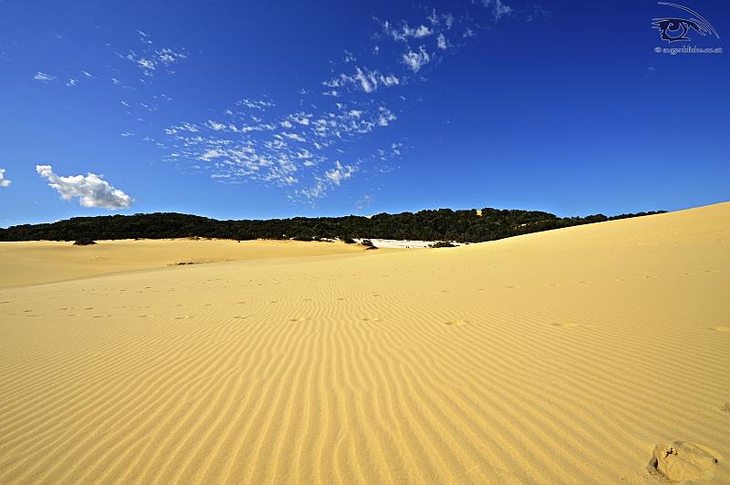 Fraser Island Dunes