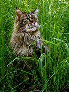 ... Frau Amelie im Gras ...