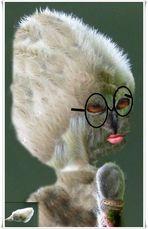 Frau Magnolie bringt Euch ein Ständchen