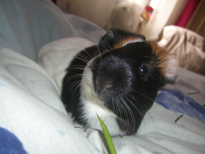 Frau Schweinin