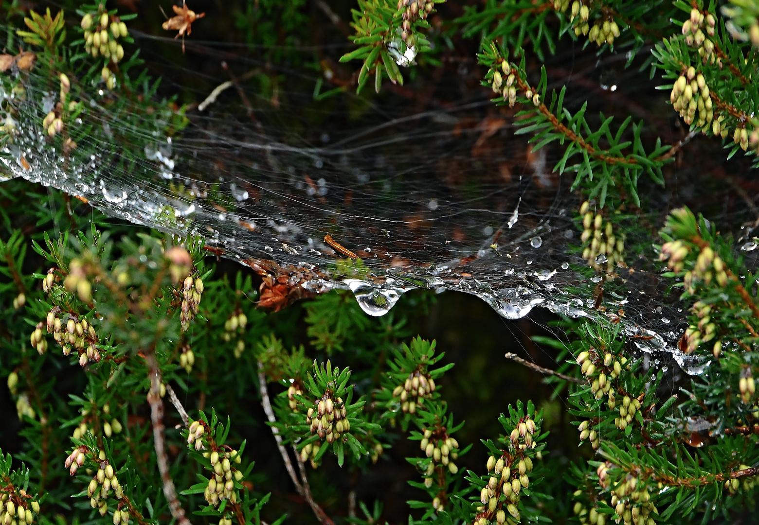 Frau Spinne hat Hochwasser