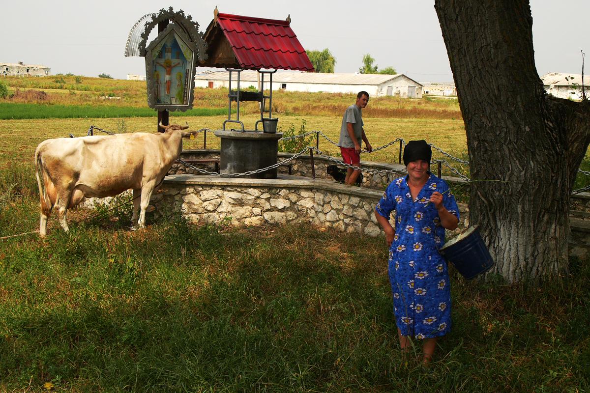 Frau und Kuh