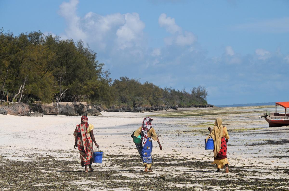 Frauen an Zanzibars Ostküste