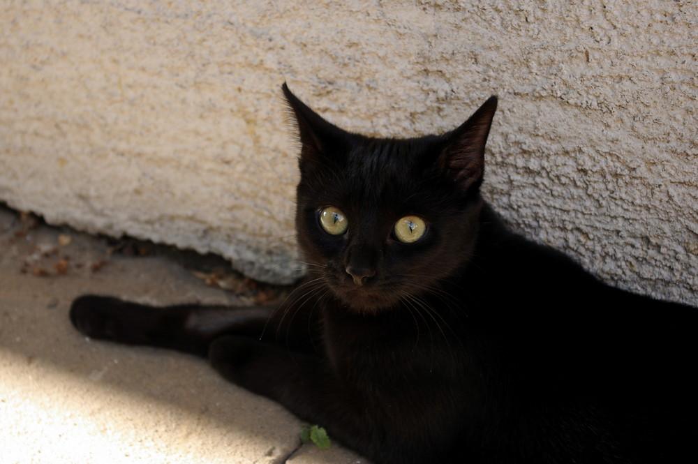 Freche kleine Katze