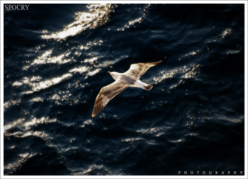 Free Like a Bird 2