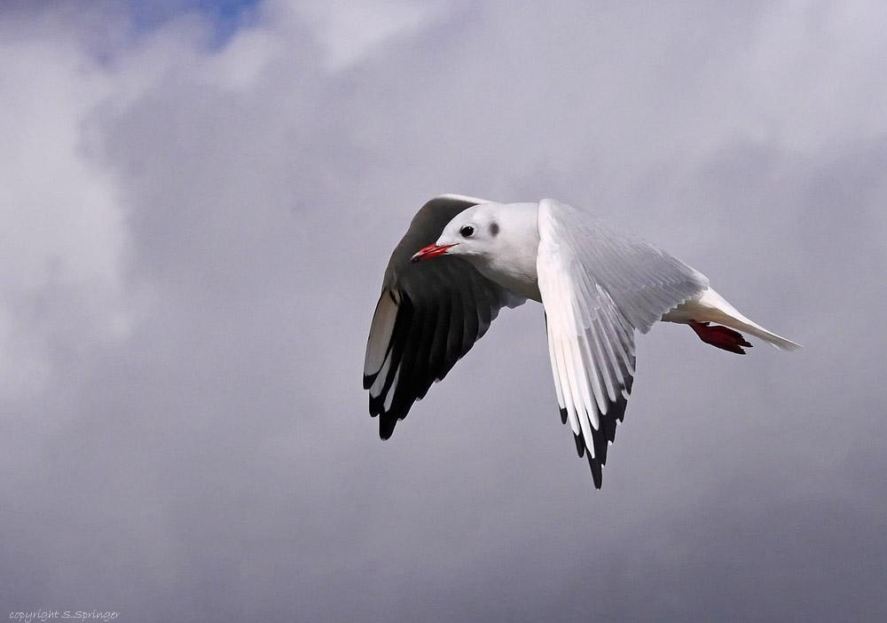 Free like a Bird....