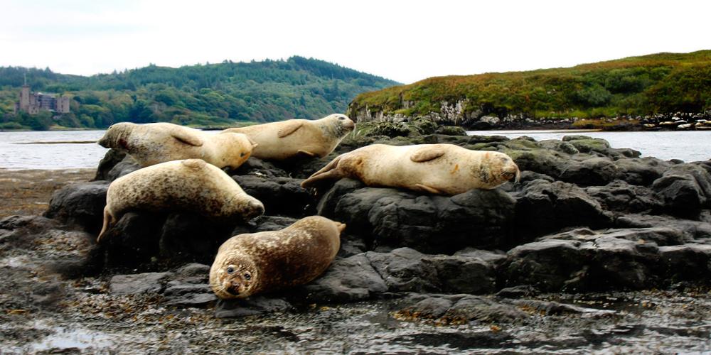 Free Seals