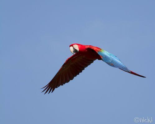 Free te fly
