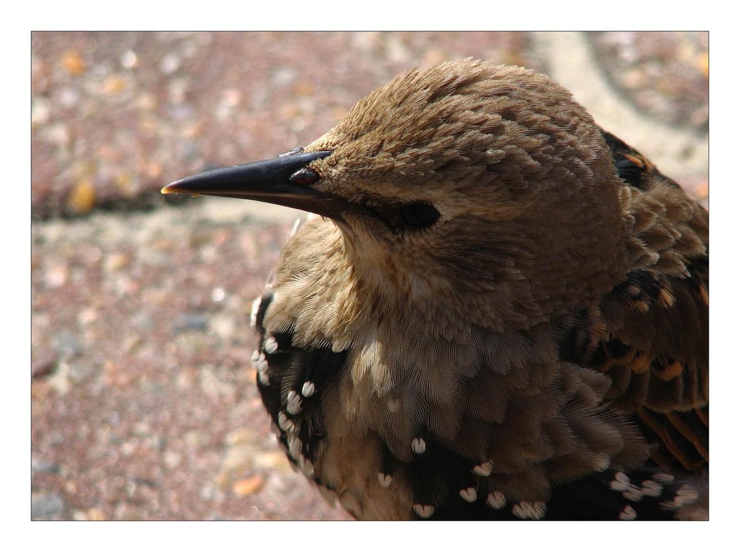 Freebirds (3)