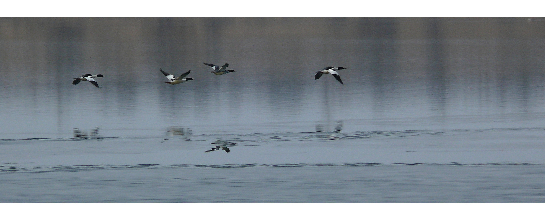 Freebirds (4)