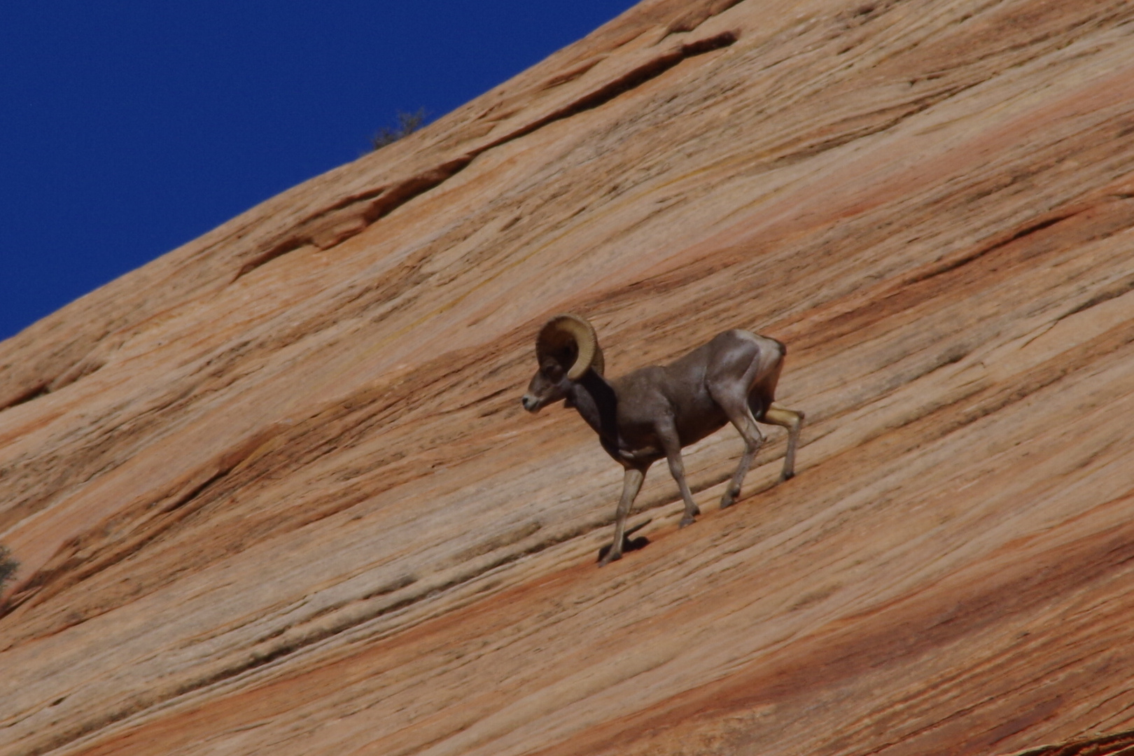 Freeclimber im Zion Nationalpark
