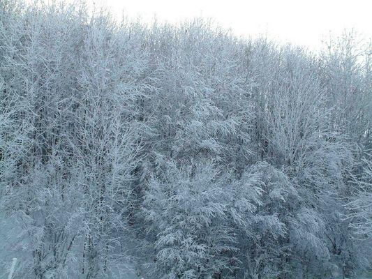 ~~ freezed trees ~~