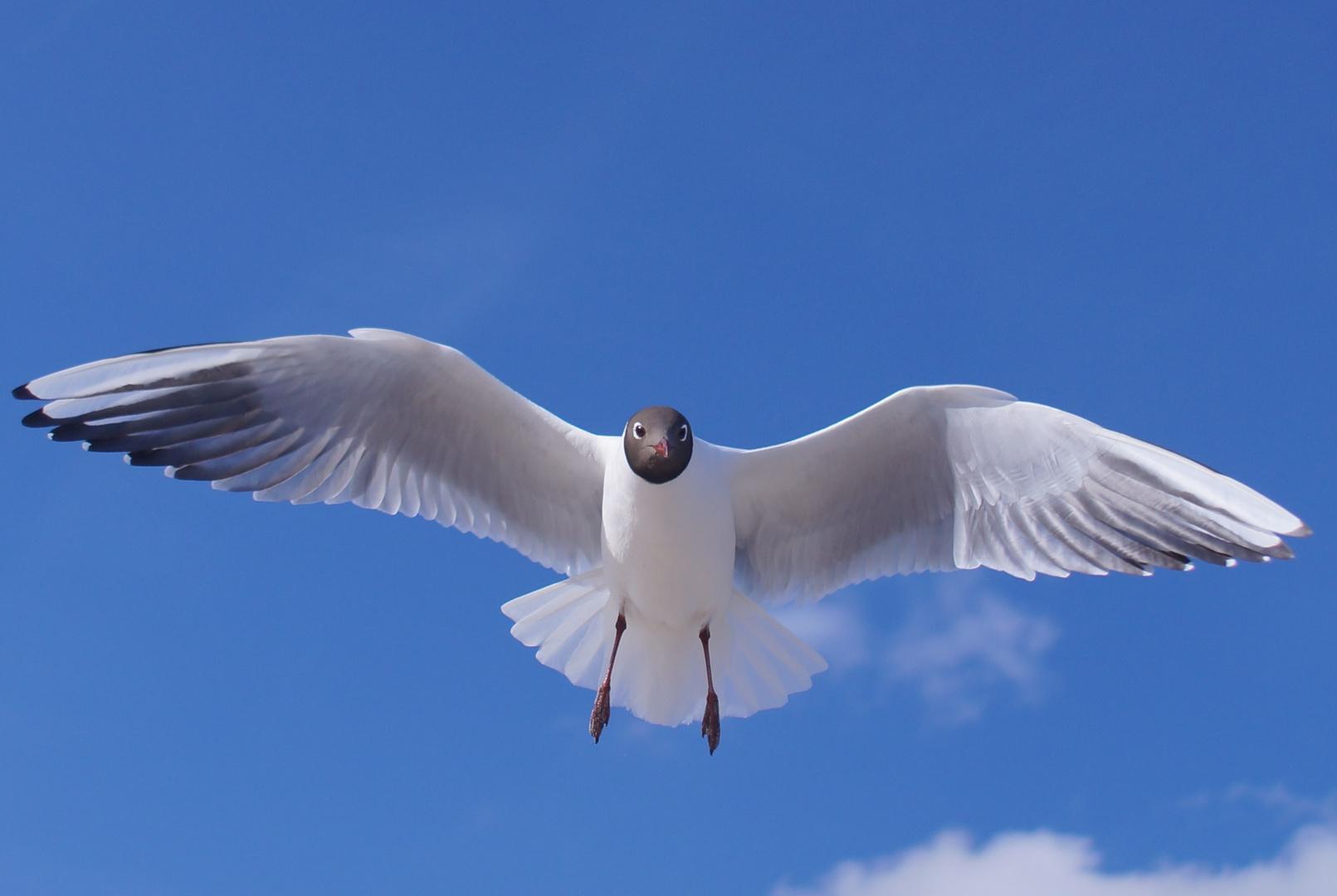 Frei wi der Wind